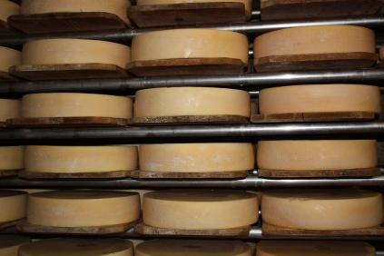 swiss cheese4