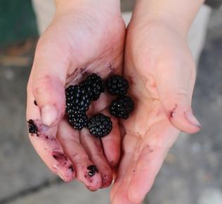 Blackberry and lemon posset 010